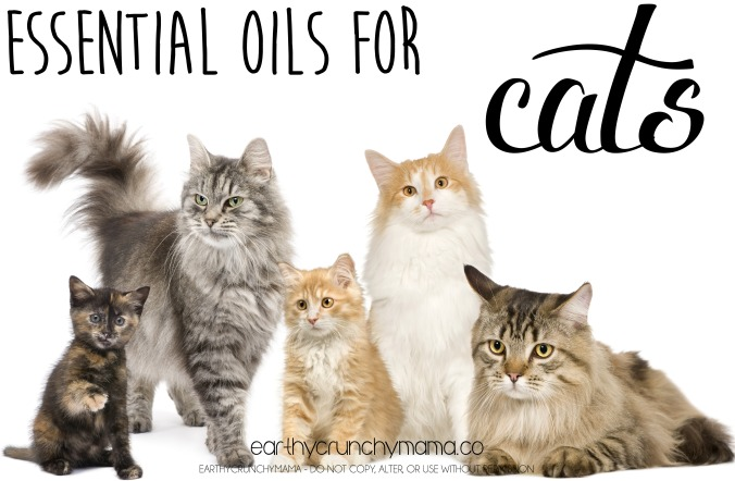 Essential Oils for Cats - Earthy Crunchy Mama