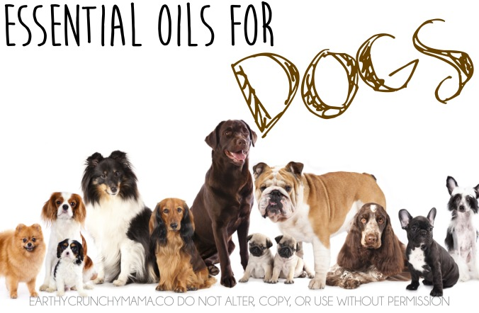 Essential Oils for Dogs - EarthyCrunchyMama.co